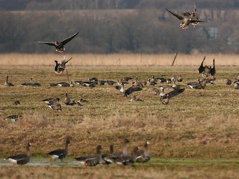 Сезон охоты в этом году в Луховицах открываеться с 6го апреля.  Вот мы и решили...