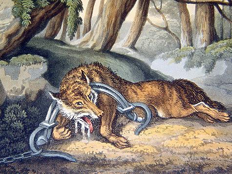 Борьба с хищниками после революции