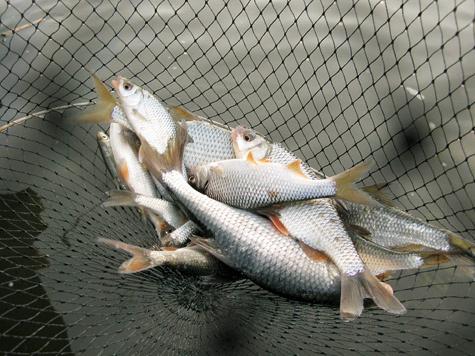способы рыбалки кастинговой сетью