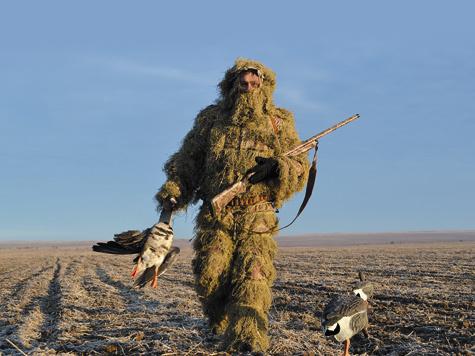 165 см может достигать размах крыльев белолобого гуся. У серого гуся эта величина может равняться 180 см.