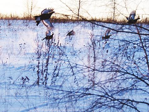 Фото Дмитрия Щаницына