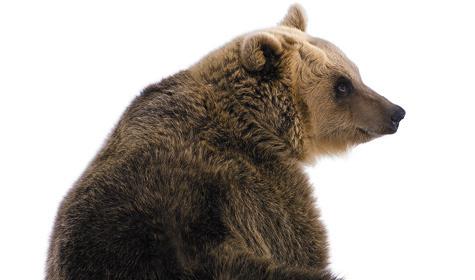 Когда спадает малина, черника, голубика, брусника, морошка, медведь переключается намолочные овсы.Наблюдательные охотники утверждают, что еще некаждый сорт овса медведь будет есть.