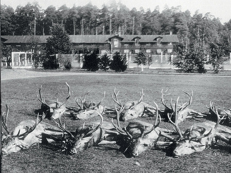 Результат царских охот в 1894 году. Добытые трофеи лежат перед дворцом.ФОТО ИЗ АРХИВА МИХАЛА СЛОНЕВСКОГО