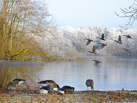 По морозцу и снежку за утками