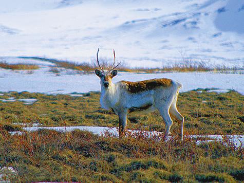 Фото U.S. Geological Survey/FLICKR.COM