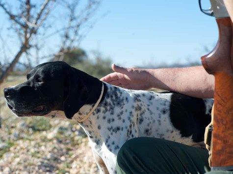 То, что заболеванию собаки предшествовало обнаружение на ней клещей, говорит в пользу пироплазмоза. Но то, что клещ вами обнаружен не был, нисколько не снимает этот диагноз Фото: fotolia.com