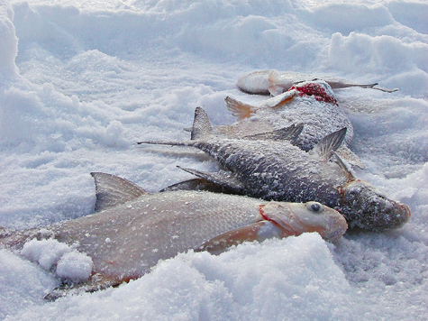 способы ловли рыбы зимой на реке