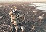 Фото номера: Липецкая область, общедоступные охотничьи угодья