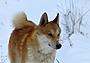 """Резолюция участников всероссийской акции """"В защиту правильной охоты и кровного собаководства"""""""
