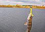 Рыболовные вести с водоемов Подмосковья