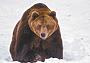Схватка с медведем: редкое спасение