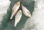 Жизнь без рыбалки: терпеть невозможно