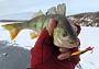 Первая рыбалка со льда