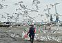 Рыбалка в Анадыре: лосось уходит на корм чайкам