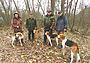 Голоса гончих в Дьяковском лесу