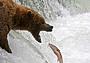 Русские медведи: записки охотоведа