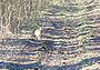 Особенности поведения лесного русака