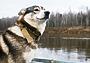 В Госдуме прошло заседание согласительной комиссии по притравке животных