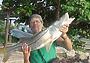 Вдоль Карибов не без рыбы