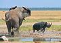 Намибия глазами российского охотоведа