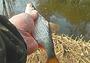 О ловле на малых реках осенью