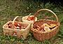 Секреты тихой охоты: ищем грибы и ягоды