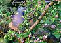 Подсолнечное сафари: охота на голубя