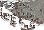 В Москве зимует двадцать семь тысяч серых шеек