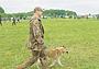 Мысли вслух после XII Всероссийской выставки охотничьих собак