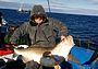 Ловим треску в Баренцевом море