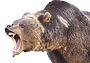 За пещерным медведем: выкурить зверя нужно уметь