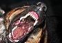 Вакцинация собак важна и эффективна