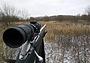 Важные составляющие успеха на загонной охоте