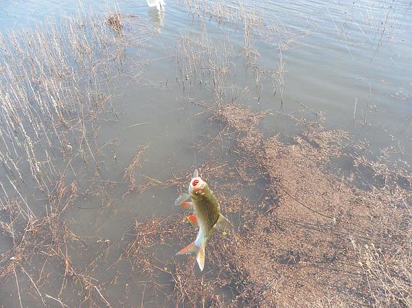 подледная рыбалка сегодня