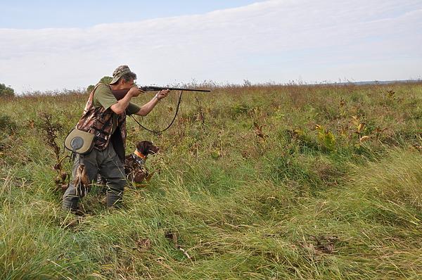 Охота на куропатку с легавыми