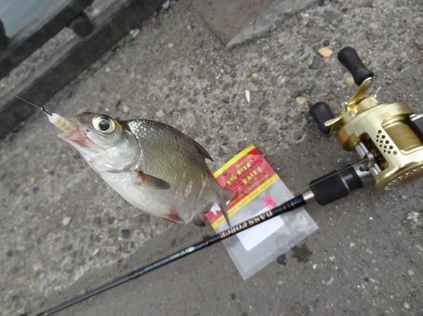 какая рыба клюет в дождь