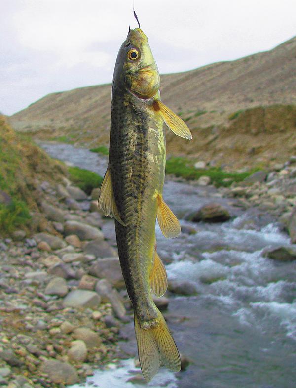 как ловить рыба маринка