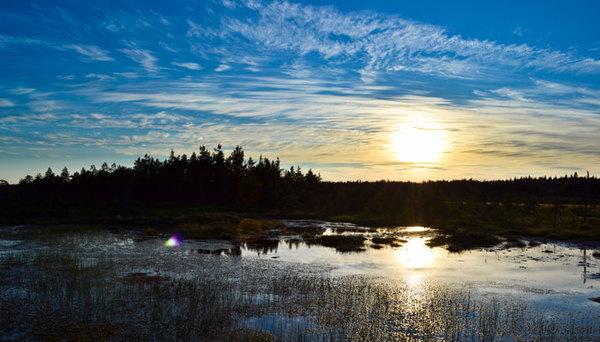 Летние прогулки по болотам