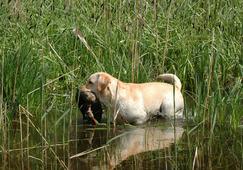 Собака - тоже охотник