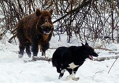 Охотник - готовый защитник страны