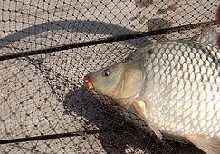 Разные приманки и разные рыбы