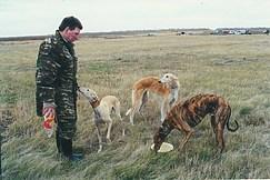 Борзые на охоте