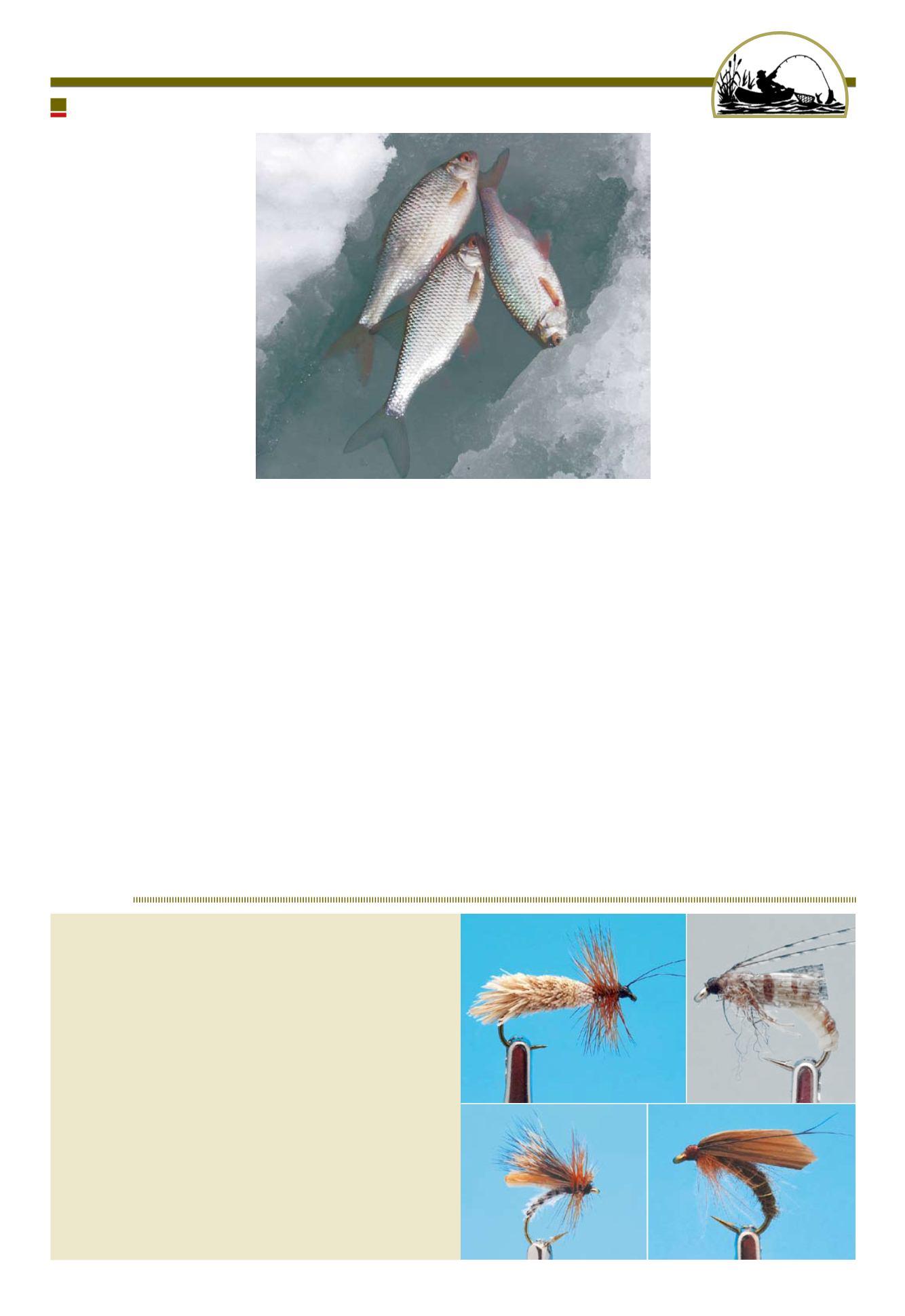 Алфавит рыбака