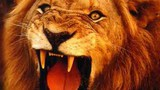 Атака бешеного льва