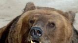 Медведь растерзал посетителя зоопарка