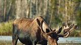 Задержание браконьеров. Дело А.Довыденко