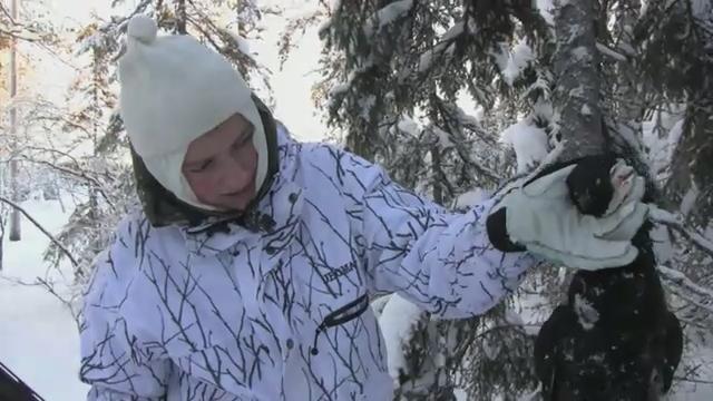 Шатунов-тающий снег скачать